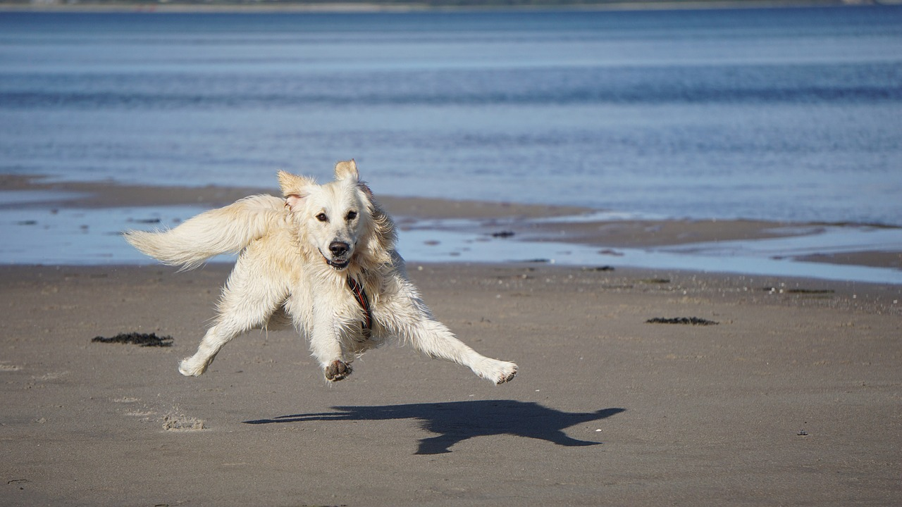 "LISTEN: ""Dog shouldn't be allowed on the beach"" Agree or Disagree, your comments"